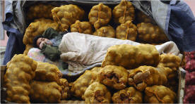 A vendor lay smoking amid bags of potatoes in Shanxi Province, China, this month as he awaited customers. Potato production has sharply risen in China. Photo: Reuters