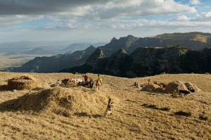 Using hand tools and draft animals, a family harvests wheat in Ethiopia�s famine-prone highlands.  Photo: Robin Hammond/National Geographic