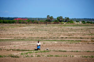 A man stands in the middle of parched paddy land in the northern Kilinochchi District. Credit: Amantha Perera/IPS