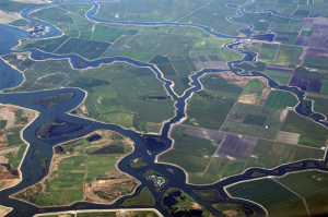 A portion of the Sacramento-San Joaquin Delta from the air. Over the past 150 years, human engineering has vastly changed the delta. Photo: KQED